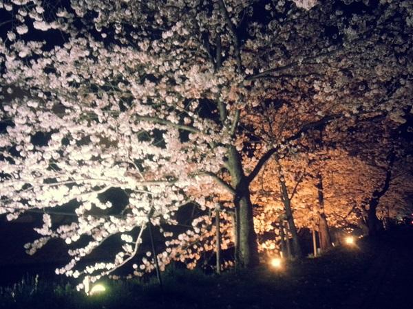 【長野県松本市】雨降りのライトアップされた松本城と桜まつり #sakura2015bl