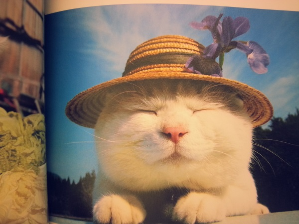 のせ猫プレミアムで癒される│SHIRONEKO│子どもにも読ませたい一冊レビュー│書評