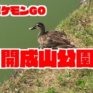 【ポケモンGO】開成山公園で出現するポケモンの巣|福島|開成山大神宮