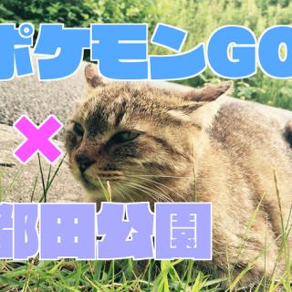 【ポケモンGO】横浜都田公園出現情報ポケモンの巣一覧│目撃情報|ネコ