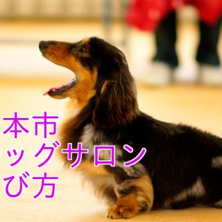 松本市ドッグサロンの選び方|料金・トリマー・安全・近くの