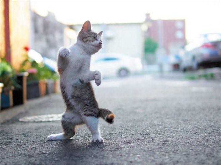 のら猫拳が大ベストセラー!闘うニャンコ写真集が売れる理由
