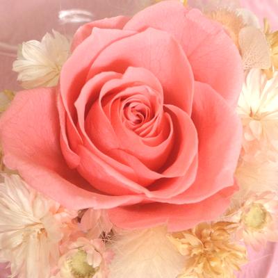 【ブロガー紹介2015】絶対幸せになってやる。Luxさんと恋愛談義