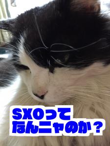 SXOで成果を出すためのSXO基礎知識とSEOとの違い|ブロガーサイト運営者向け
