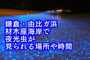 鎌倉・由比ヶ浜・材木座で夜光虫が見られる場所と時間