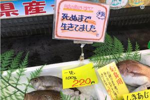 死ぬまで生きてましたという竹野鮮魚のポップが色々考えさせられる 場所