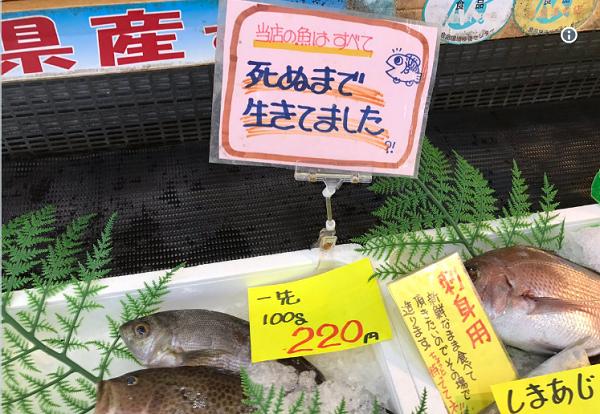 死ぬまで生きてましたという竹野鮮魚のポップが色々考えさせられる|場所