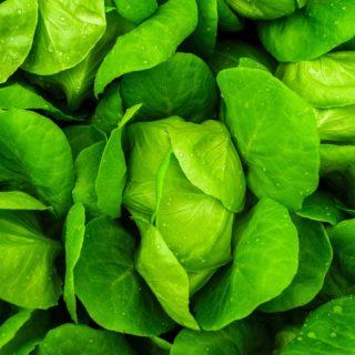 レストラン野菜で人気の野菜一覧│安曇野市